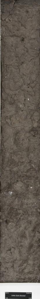 Brunisol Soil