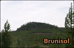 brunisol