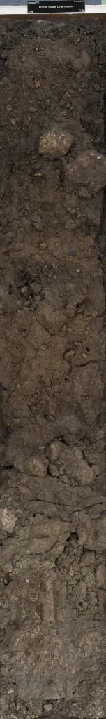 Chernozem soil monolith