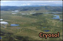 cryosol