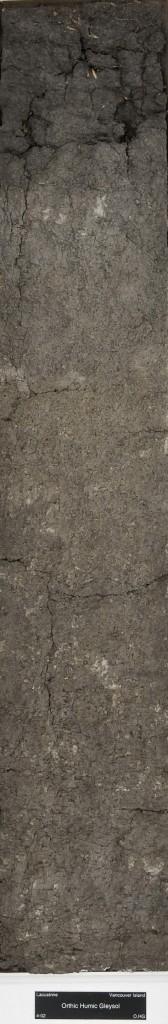 gleysol soil monolith