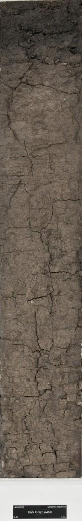 luvisol soil monolith