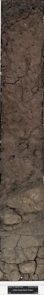 podzol-156x1024.jpg
