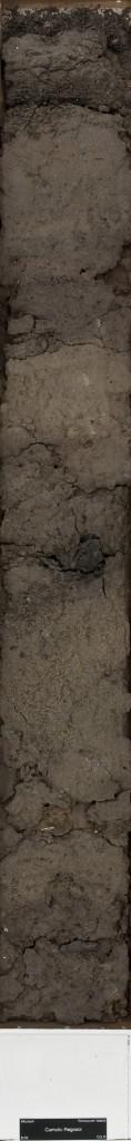 regosol soil monolith