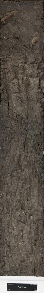 Solonetz soil monolith